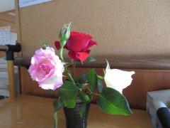 美しいバラ
