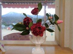 冬の花・椿