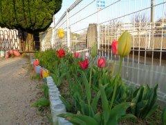 カトリック潜竜聖母幼稚園の園庭のお花