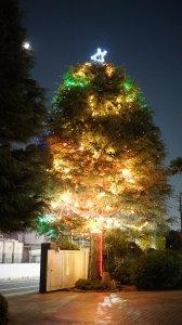 2020_christmas-tree.jpg