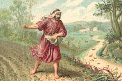 年間第15主日のミサ
